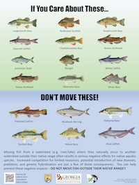 Don't Move Fish Poster