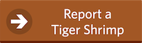 Report a Tiger Shrimp Button