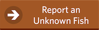 Report an Unknown Fish Button