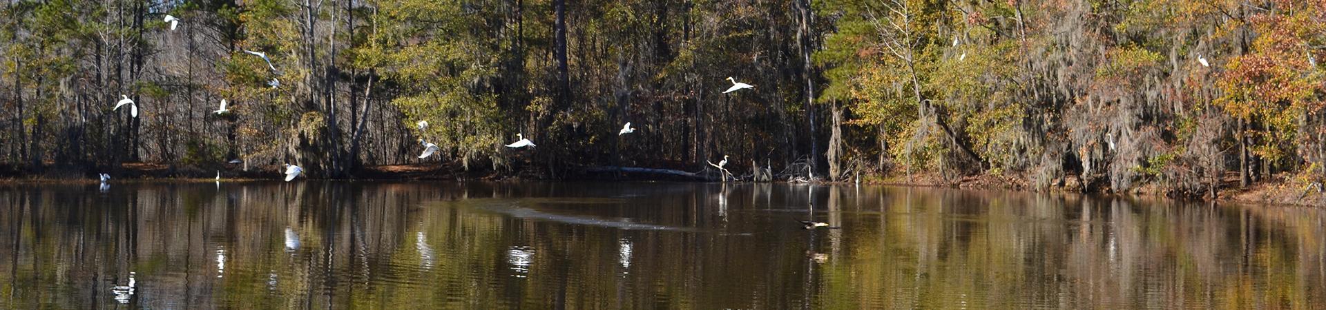 Birds Landing on Water