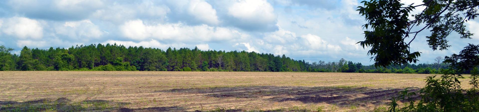 Anderson Farms Dove Field