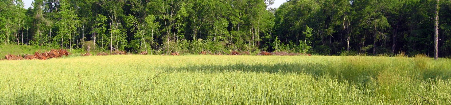 Field at Blanton Creek