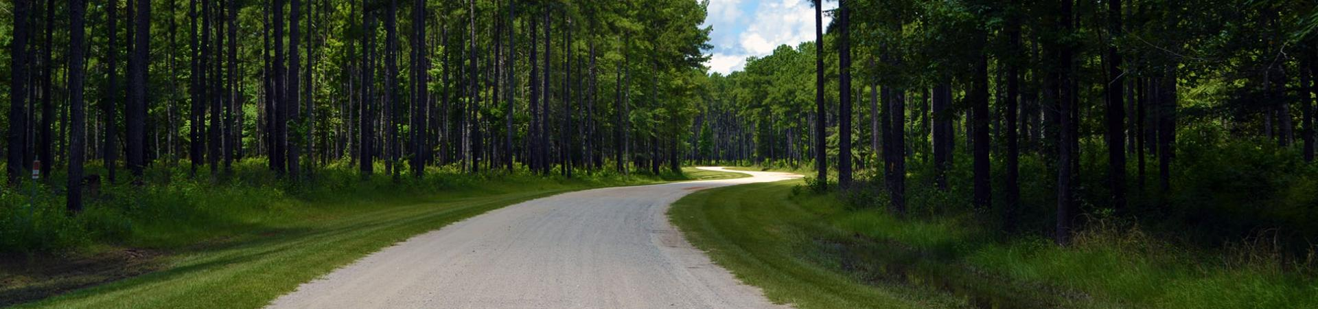 Bullard Creek Unpaved Road