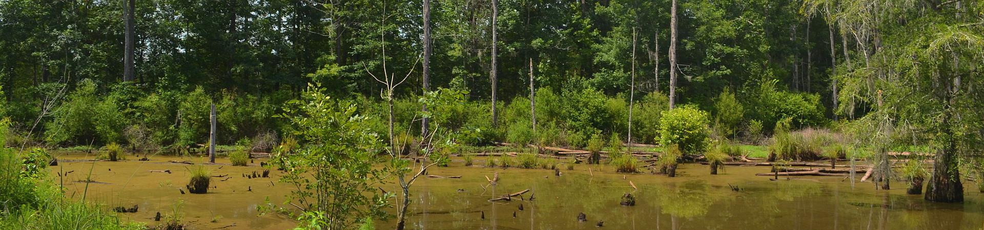 swamp at Dialne WMA