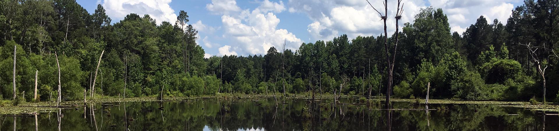 Creek at Lanahassee Creek