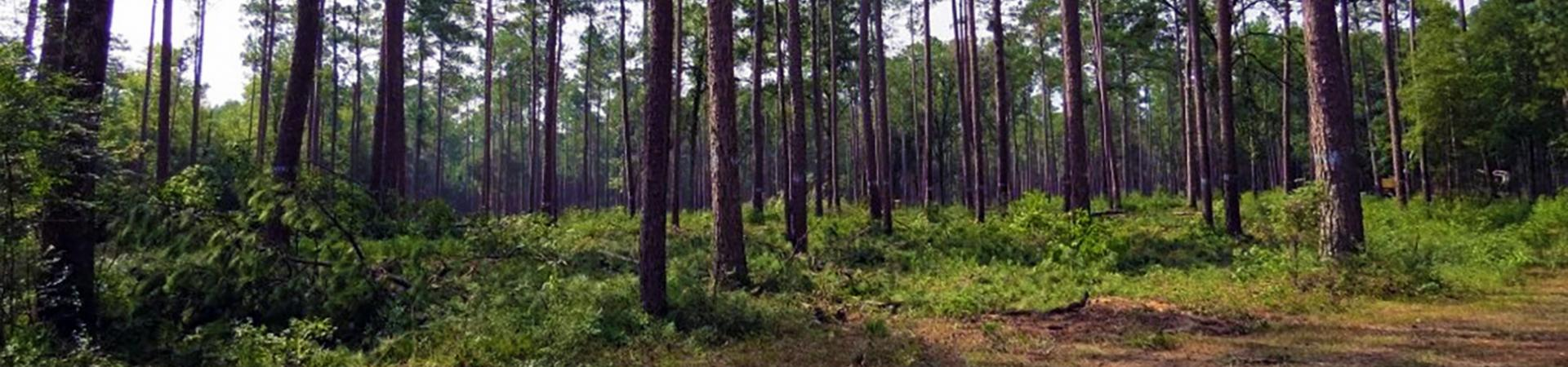 moody forest wma moody forest wma   wildlife resources division  rh   georgiawildlife