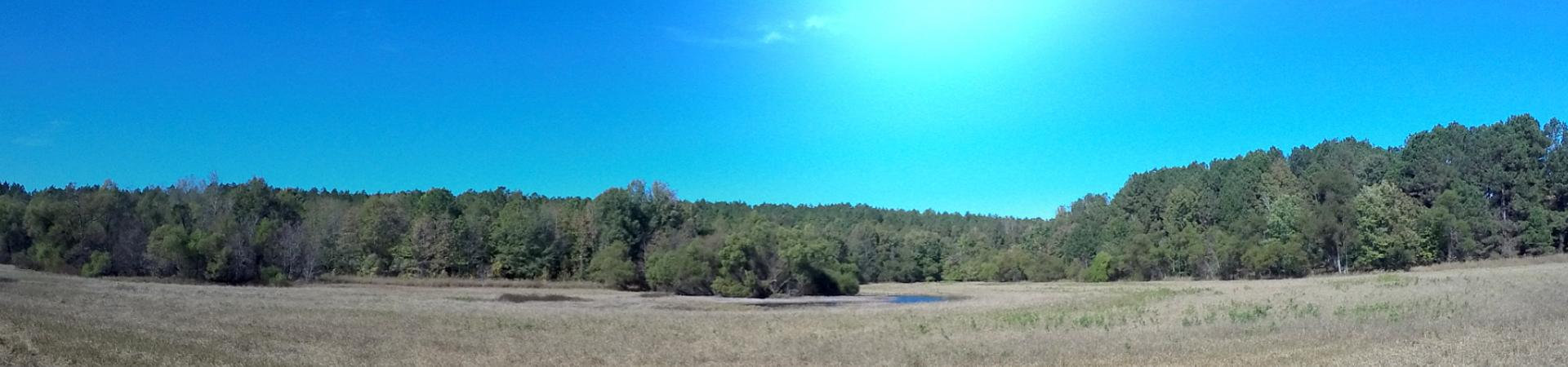 waterfowl impoundment at Oconee WMA