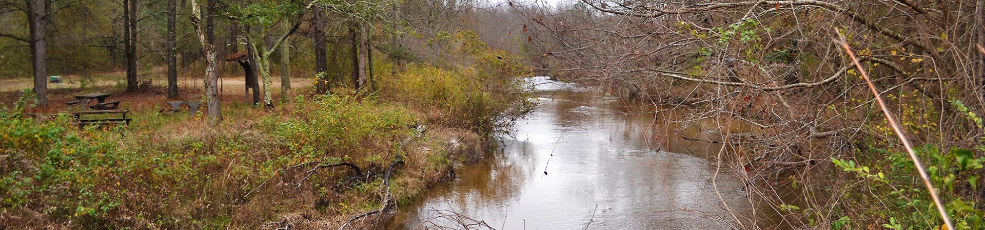 Creek at Spirit Creek
