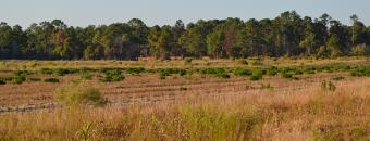 dove field at Chattahoochee Fall Line Wildlife Management Area