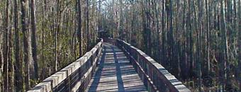 Wetlands Bridge