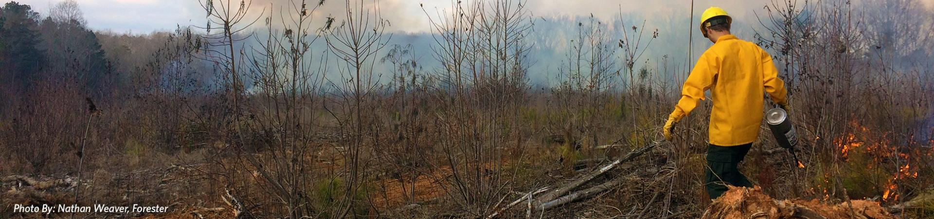 Prescribed Fire (Photo by: Nathan Weaver)