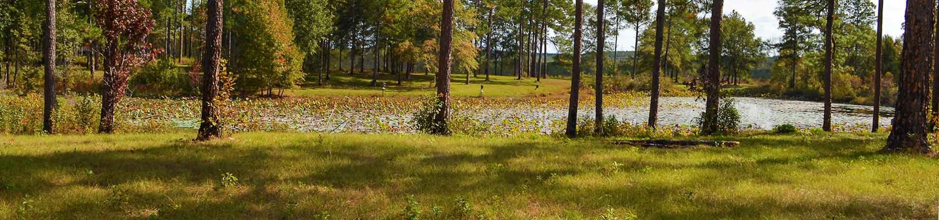 camping area and pond at Ocmulgee Wildlife Management Area