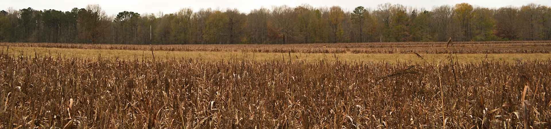 dove field at Redlands Wildlife Management Area