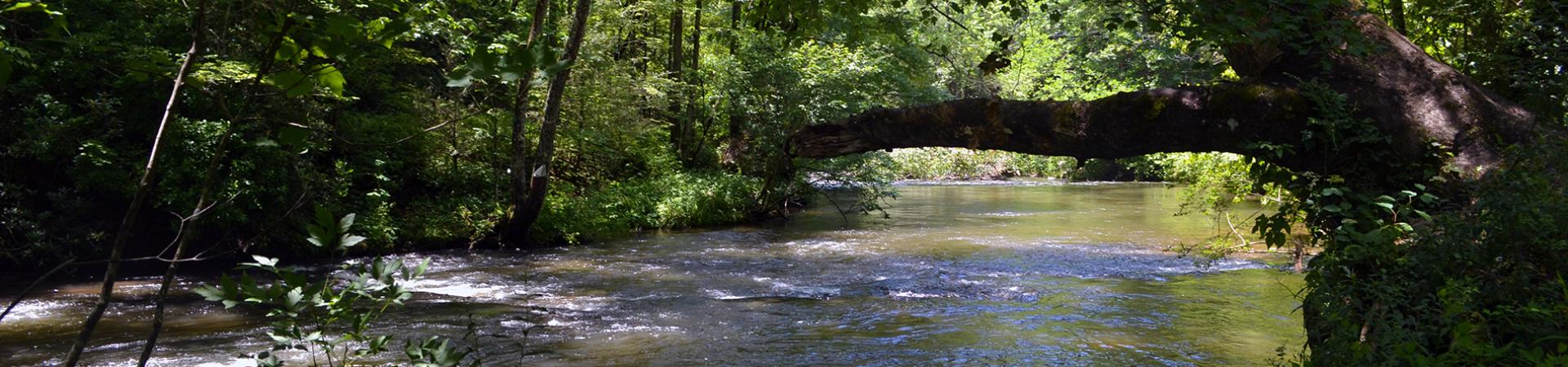 Coopers Creek in the Shade