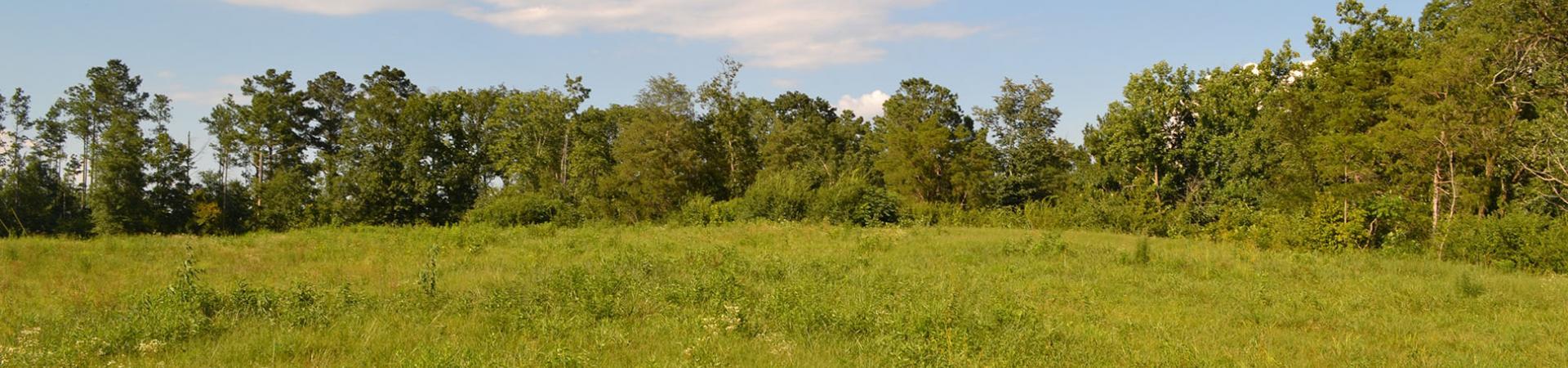 McEntire Road Open Field