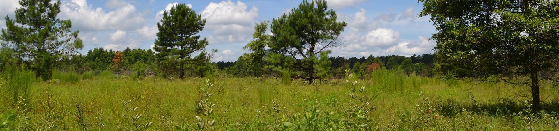 Mead Farm Open Field