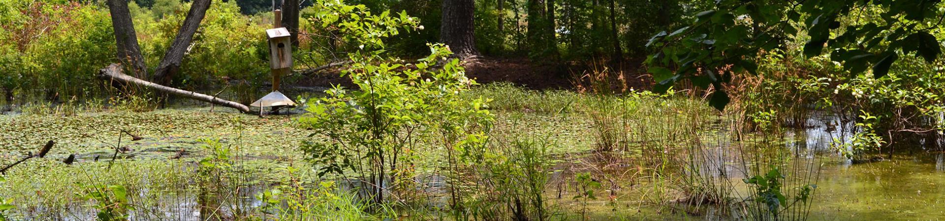 Pleasant Valley Swamp