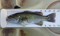 Bass Measured