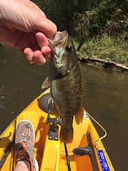 Bass In Kayak