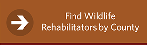 Find Wildlife Rehabilitators by County