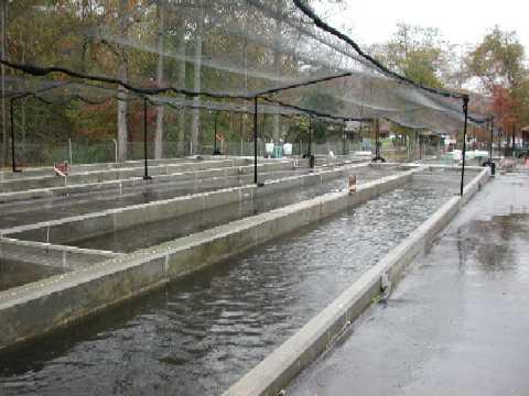 Aquaculture Jobs Kologisk Husdyrhold