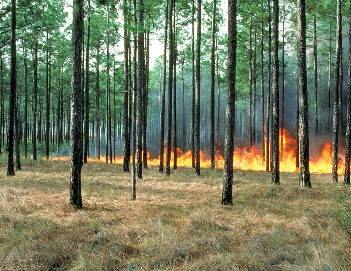 Photograph of a prescribed burn in South Georgia.