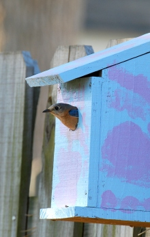 Bluebird box (Terry W. Johnson)